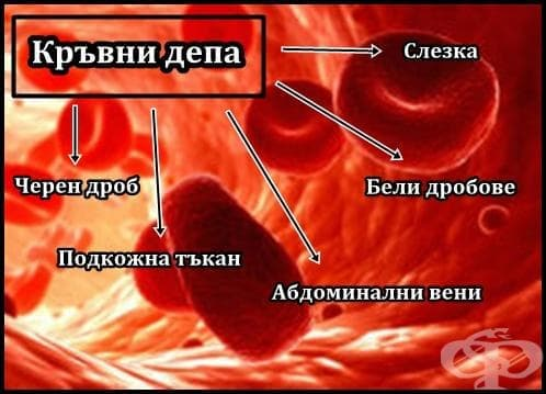 Кръвни депа - изображение