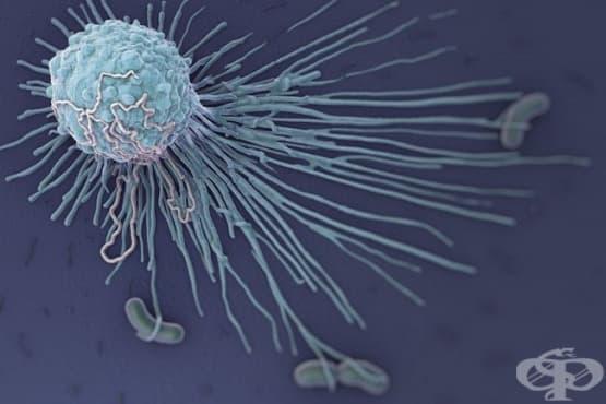 Макрофаги - изображение
