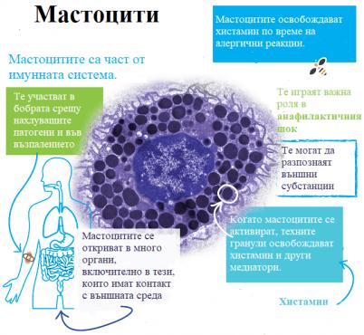 Мастоцити - изображение