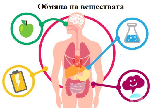 Обмяна на веществата - изображение