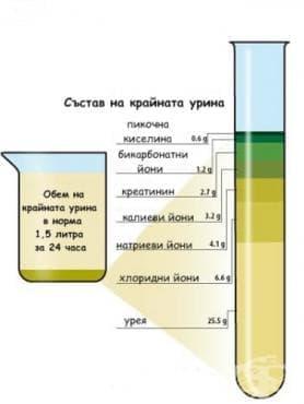Обем и състав на крайната урина - изображение