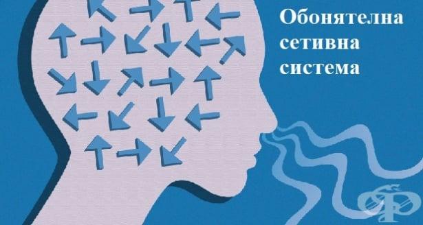 Обонятелна сетивна система - изображение
