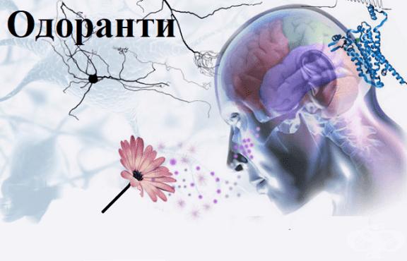 Одоранти - изображение