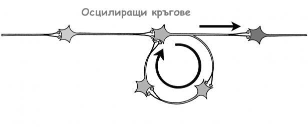 Осцилиращи кръгове - изображение