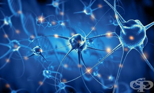 Преработка на информацията в неврона - изображение