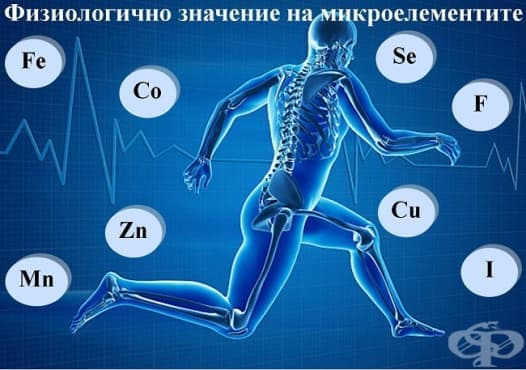 Физиологично значение на микроелементите - изображение