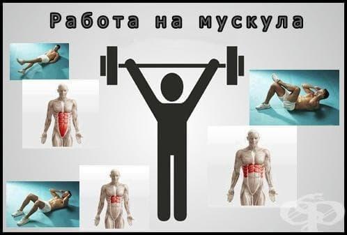 Работа на мускула - изображение