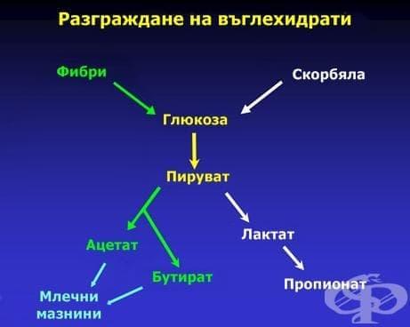Разграждане на въглехидрати - изображение