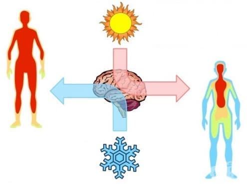 Терморегулация при топло и студено - изображение