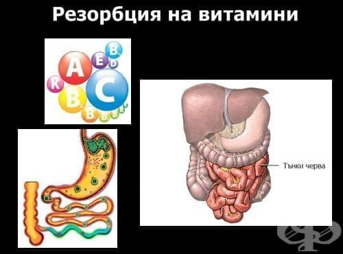 Резорбция на витамини - изображение