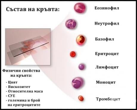 Състав и физични свойства на кръвта - изображение