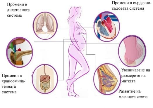 Промени в организма на майката по време на бременността - изображение