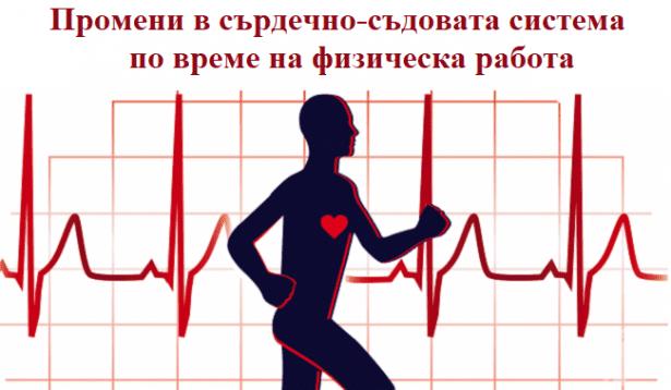 Промени в сърдечно-съдовата система по време на физическа работа - изображение