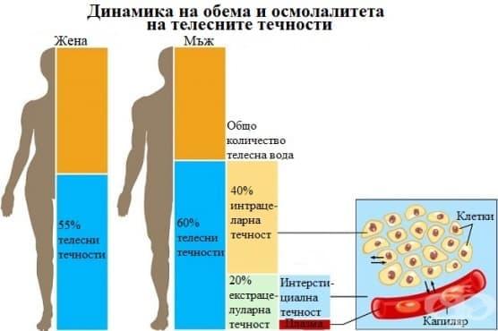 Динамика на обема и осмолалитета на телесните течности - изображение
