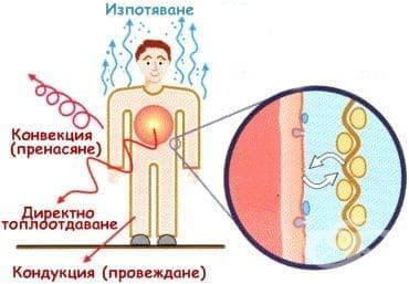 Терморегулаторна функция на кожата - изображение