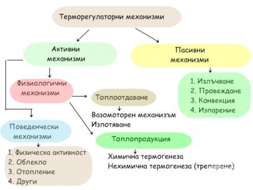 Терморегулаторни механизми - изображение