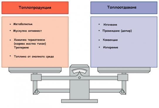 Топлинен баланс - изображение