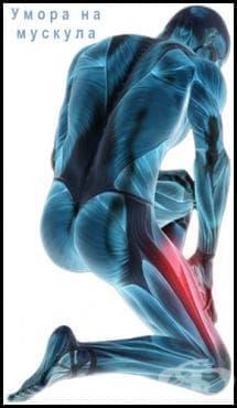 Умора на мускула - изображение