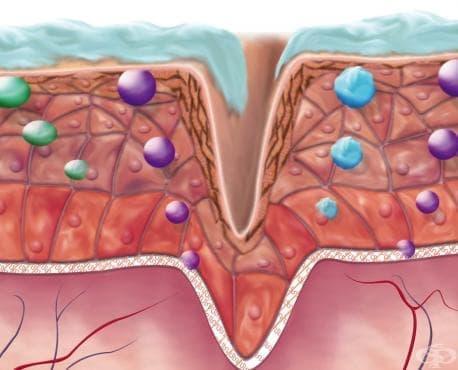Вискоеластичност на кожата - изображение