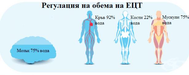 Регулация на обема на екстрацелуларната течност - изображение