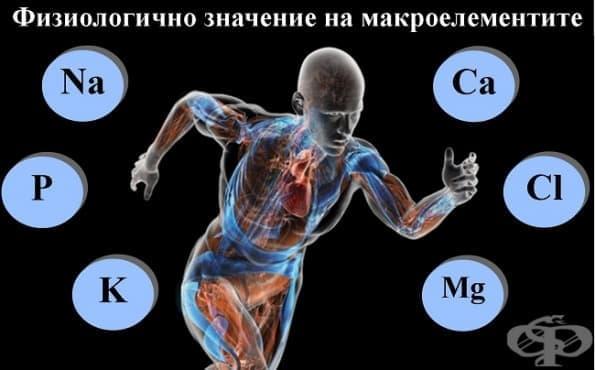 Физиологично значение на макроелементите - изображение