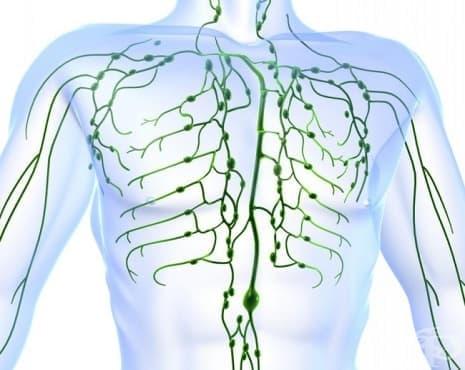 Лимфни възли - изображение