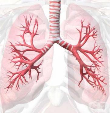 Значение на дихателните пътища - изображение