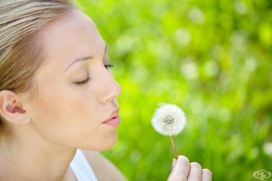 Отново за алергиите - рискови фактори, колко е често заболяването и как да го лекуваме - изображение