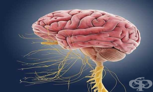 Проблемите с нервната система - симптоми, болката като сигнал, как да ги разпознаем и какво може да помогне - изображение
