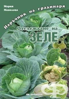 Изображение към продукта ОТГЛЕЖДАНЕ НА ЗЕЛЕ - МАРИЯ МАНОЛОВА