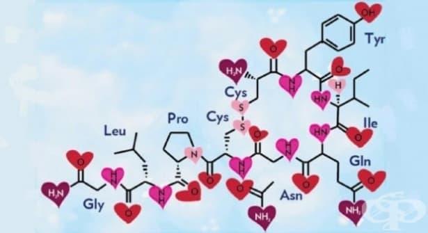7 начина да увеличим нивата на окситоцина в тялото си - изображение