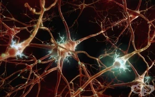 Какво представлява автономната (вегетативна) нервна система - изображение