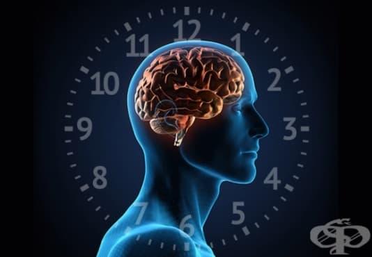 Как да синхронизираме биологичния си часовник с ежедневния си график - изображение