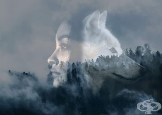 """7 цитата от книгата """"Бягащата с вълци"""" - изображение"""