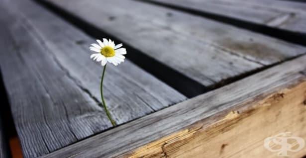 Притча: Добрите дела живеят в добрите сърца - изображение