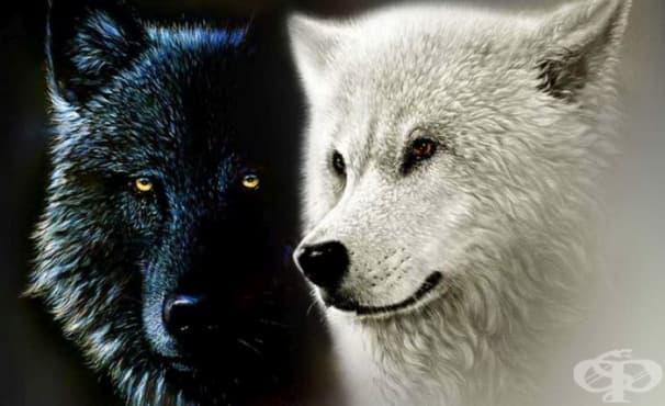 Притча за добрия и лошия вълк в човешката душа  – винаги печели този, който ние нахраним - изображение