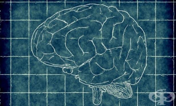 Гейл Салц за връзката между психичните заболявания и гениалността - изображение