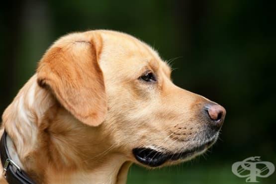 Как да преодолеем страха от кучета - изображение
