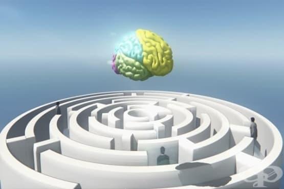 Какво е невербална интелигентност - изображение