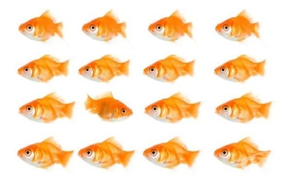Защо всички ние не сме добри интуитивни психолози: склонността към фалшив консенсус - изображение