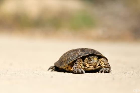 Притча: избирам да съм щастлива костенурка - изображение