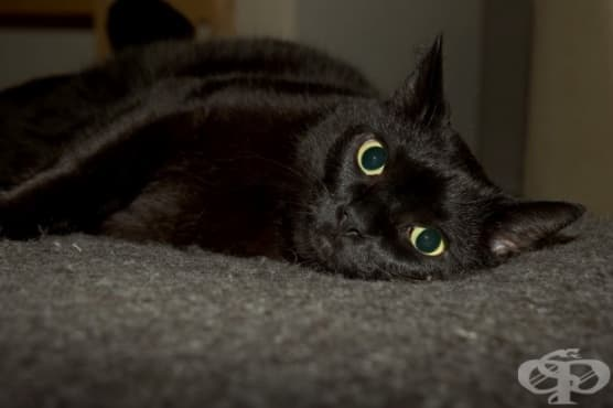 Разбиране на страха от котки - изображение