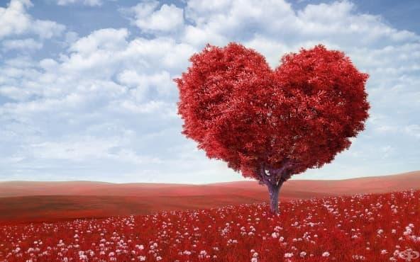 5 психологически теории за любовта - изображение