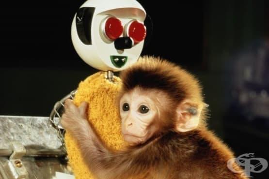 Науката за любовта: Хари Харлоу и природата на привързаността - изображение