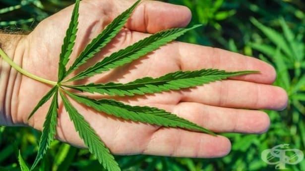 Как марихуаната се отразява на тялото и мозъка – част 2 - изображение