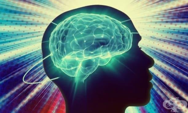12 неразгадани мистерии за човешкия мозък - изображение