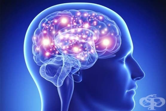 Наистина ли използваме само 10% от мозъка си - изображение
