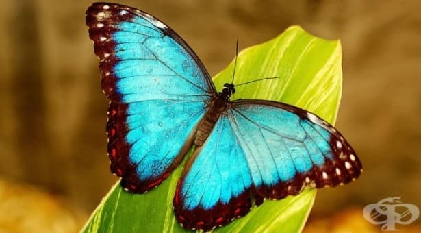 Притча за пеперудата и змея или защо ненавиждаме тези, които изглеждат по-щастливи от нас - изображение