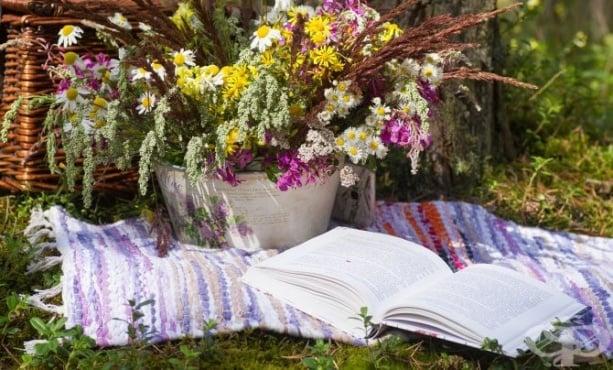 Рецептата на терапевта за домашна отпуска - изображение