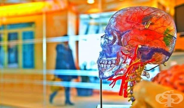 6 психологически термина, които психолозите не използват - изображение